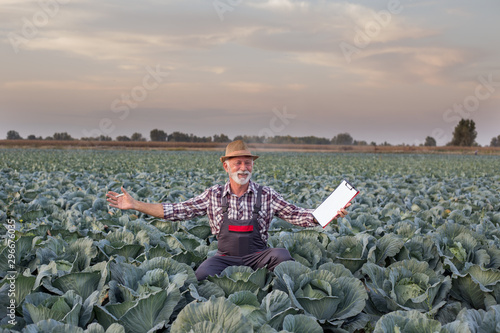 Photo Stands Pale violet Happy farmer in cabbage field