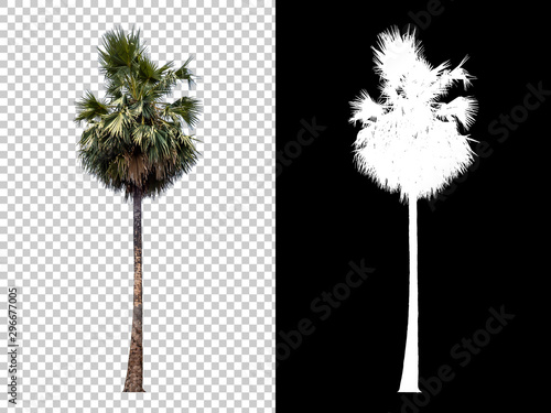Isolated coconut palm tree on white background with high quality mask alpha channel and clipping path Wallpaper Mural