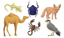 Desert Living Creatures Vector...