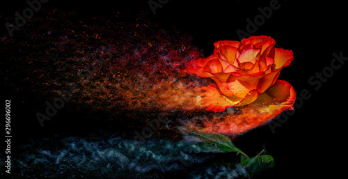 Poster Bloemen Rose like a Sandstorm