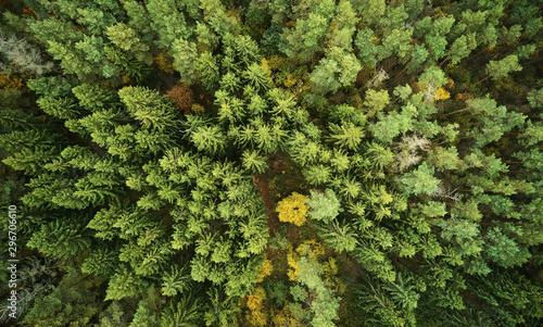 Montage in der Fensternische Pistazie Land of green autumn forest