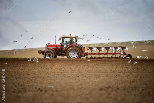 farmer at work in the middle of the seagulls