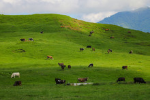 View Of The Green Hills And Mountainsides. A Clear Sunny Day. On The Slopes In The Distance Sheep And Cows Graze. Selective Focus.