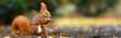 canvas print picture - fleißiges Eichhörnchen im Herbst