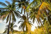 Palm Tree On The Beach In Samara Nicoya Costa Rica Central America