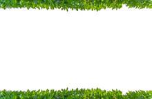 Bordure De Plantes Vertes