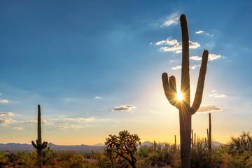 Silueta na kaktusu Saguaro na zalasku sunca u pustinji Sonoran u Phoenixu, Arizona, SAD
