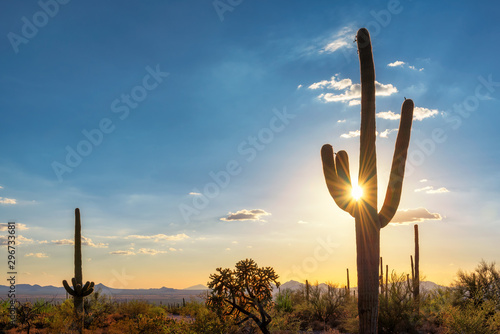 Canvas Prints Cactus Silhouette at Saguaro cactus at Sunset in Sonoran desert in Phoenix, Arizona, USA