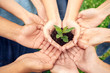 canvas print picture - Volunteering. Young people volunteers outdoors together hands top view close-up holding tree seedling