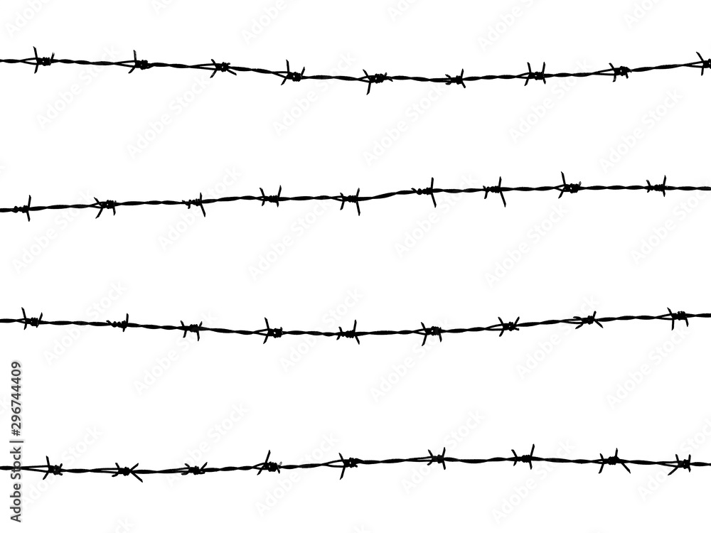 Fototapeta barbed wire of fence on white background