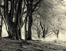 Monochrome Sepia Image Of Mist...