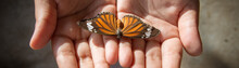 A Child Holding An Orange Butterfly In Hands. Close Up Nature And Childhood Concept Image