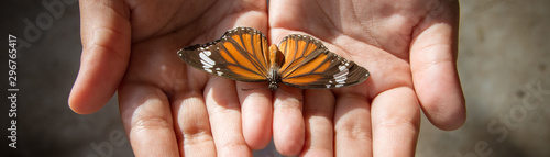 fototapeta na drzwi i meble A child holding an orange butterfly in hands. Close up nature and childhood concept image