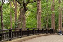 巨大な木々と橋