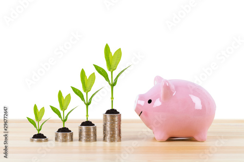 Fototapeta Piggy bank, and coin stack with growing tree leaves on white background, saving concept obraz