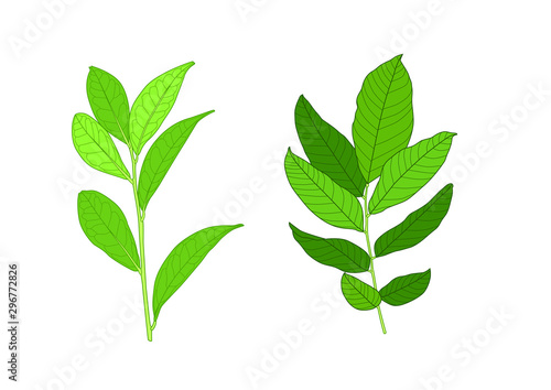 Vászonkép  Green Leaves fresh abstract isolated on white background illustration vector