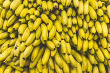 A Bunch Of Bananas In The Market. Many Ripe Yellow Bananas On A Supermarket Counter
