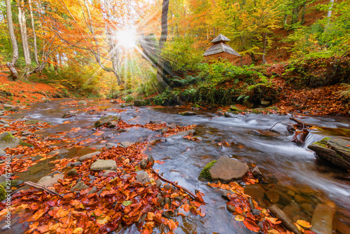 Printed kitchen splashbacks Forest river Picture of autumn Carpathian forest with spring water and waterfall, strewn with yellow and red leaves and sunlight through the foliage of trees.