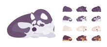Black, White Dog, Husky, Shepherd Sleeping Set. Pet, Family Companion, Home Guarding, Farm Or Police Security Breed. Vector Flat Style Cartoon Illustration Isolated, White Background, Different Views