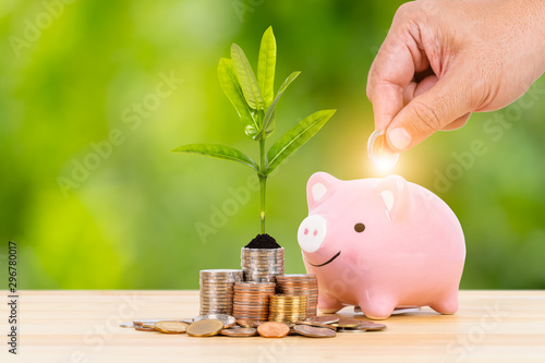 Fototapeta Piggy bank and coin stack with growing leaves, with hand putting money, on green tree background, saving concept obraz