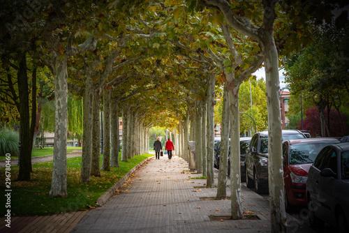campo en otoño con árboles y hojas amarillas Wallpaper Mural