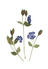 Herbarium. Composition Of Pres...