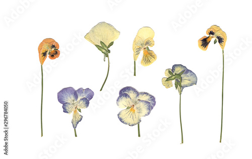 Pressed and dried meadow flowers. Scanned image. Vintage herbarium. Composition of the white, orange and blue flowers on a white background. - 296784050