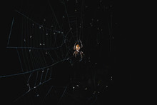 The Spider Sits In The Web At ...