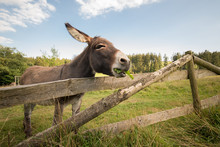 A Donkey Stands On The Meadow ...
