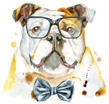 Watercolor Portrait Of Bulldog...