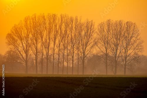 Foto auf Gartenposter Orange sunset in forest - germany