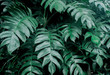Creative tropical green leaves layout. Concept : Green leaves background / Nature spring..