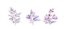 Watercolor Purple Bouquets Set. Hand-painted Realistic Botanical Illustrations Bundle. Isolated On White Flowers, Leaves, Berries For Wedding Stationery, Card Printing, Banners