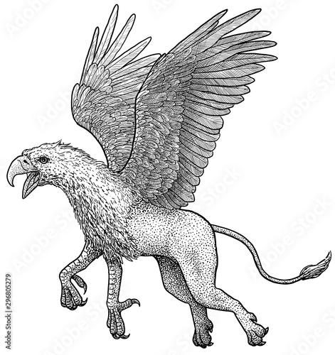 Griffin illustration, drawing, engraving, ink, line art, vector Fototapet