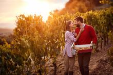 Autumn Harvest Grapes.wine Gra...