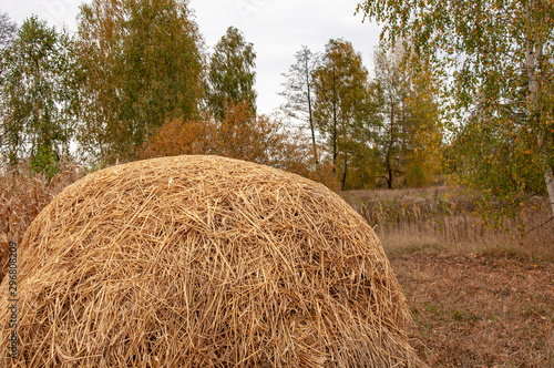 Haystack on a background of autumn trees Wallpaper Mural