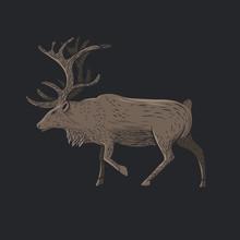 Illustration Of Beautiful Deer.