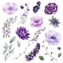 Set Of Watercolor Flowers And Berries
