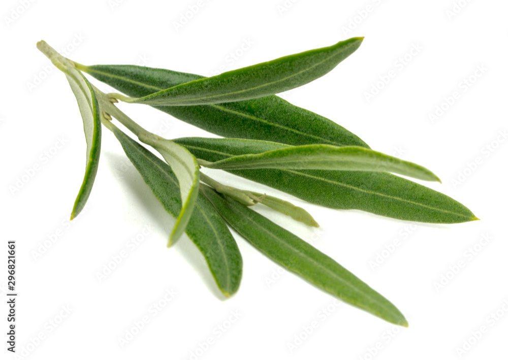 Fototapety, obrazy: olive branch on a white