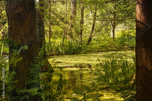 Beautiful scenery of a bayou in the middle of a forest surrounded by green trees Canvas Print