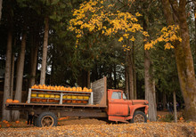 Vintage Truck Carrying Orange Pumpkins In The Fall
