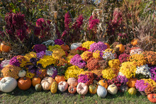 Gourds, Pumpkins And Mums For ...