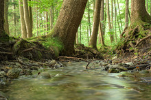 Beautiful Soft Water Stream In A Green Summer Forest. Long Exposure.