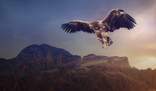 Eagle Flying Over The Dark Mou...