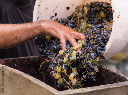 Pinturas sobre lienzo  Grinding grapes in a special juicer