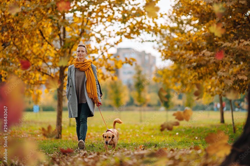 Fototapeta Woman and small brown dog enjoying in the park in autumn