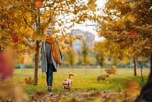 Woman And Small Brown Dog Enjo...