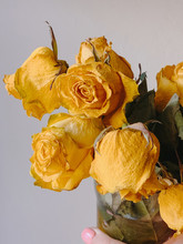 Close Up View Of Dry Yellow Roses On White Background