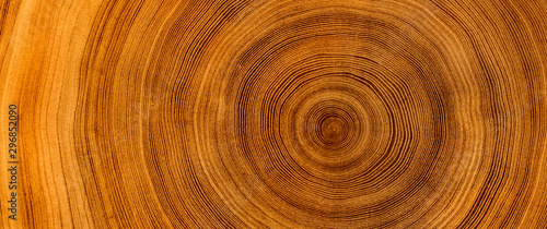 Fototapeta Detailed warm dark brown and orange tones of a felled tree trunk or stump. Rough organic texture of tree rings with close up of end grain. obraz