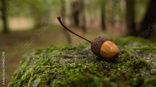 Photo Fallen acorn on rock covered with moss in the woods during autumn with beautiful autumnal colors